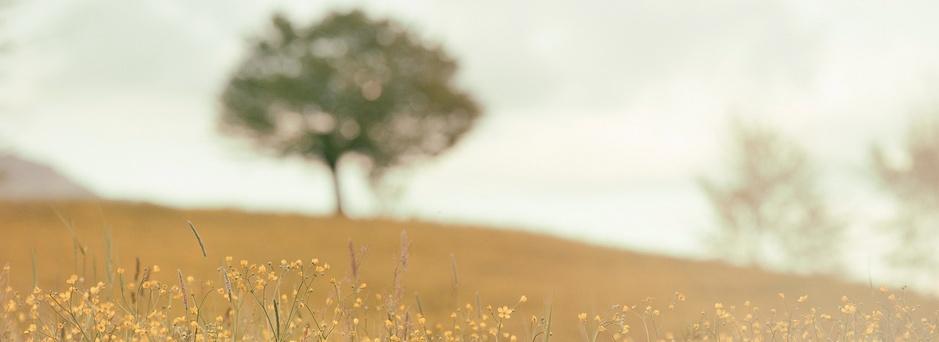 rozmyte drzewo_Zrzut ekranu 2015-08-22 o 21.20.53.png